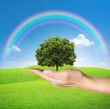Un árbol en manos humanas con el cielo azul y el arco iris Foto de archivo