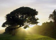 Un árbol en Misty Silhouette Fotos de archivo