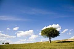 Un árbol en prado imagenes de archivo