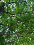 Un árbol en primavera foto de archivo