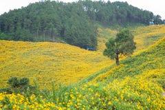Un árbol en un campo de flores. Imagenes de archivo