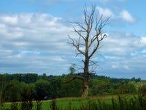 Un árbol en un campo en un día de verano Imagen de archivo