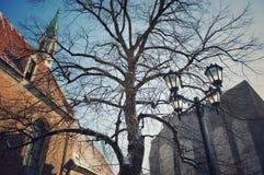 Un árbol en una ciudad fotos de archivo libres de regalías