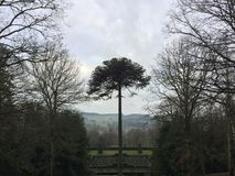 Un árbol espectacular que sube sobre un laberinto verde fotos de archivo libres de regalías