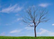 Un árbol estéril con un cielo azul y una hierba Fotos de archivo libres de regalías