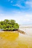 Un árbol grande en el mar. Foto de archivo