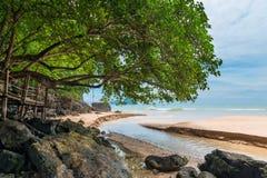 Un árbol grande en la playa sobre el río que fluye Imágenes de archivo libres de regalías
