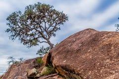 Árbol solitario en el acantilado de la montaña. Foto de archivo libre de regalías