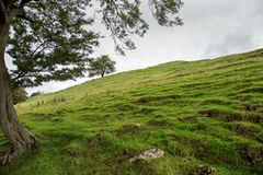 Un árbol a la izquierda proporciona un marco a un campo cubierto hierba surcado Imagen de archivo