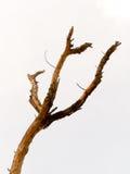 Un árbol muerto Imágenes de archivo libres de regalías