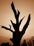 Un árbol muerto Foto de archivo libre de regalías