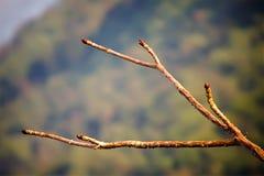 Un árbol muerto Fotografía de archivo