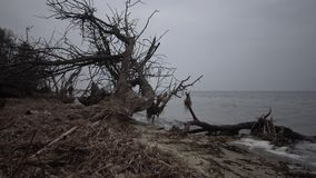 Un árbol muerto grande en una playa arenosa, un día cubierto metrajes