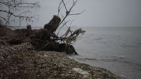 Un árbol muerto grande en una playa arenosa, un día cubierto almacen de metraje de vídeo