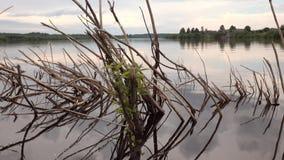 Un árbol muerto que se pega fuera del agua metrajes