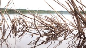 Un árbol muerto que se pega fuera del agua almacen de video
