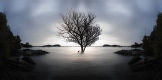 Un árbol muerto solitario y sumergido parcialmente en el mar en puesta del sol , Imagenes de archivo