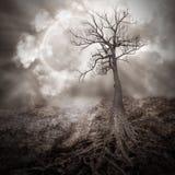 Árbol solo con las raíces que sostienen la luna Imagen de archivo libre de regalías