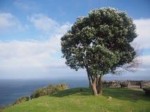 Un árbol por el mar Foto de archivo libre de regalías