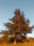 Un árbol por la tarde Fotos de archivo libres de regalías