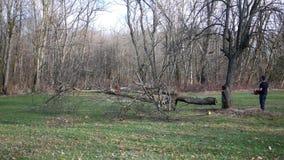 Un árbol que cae después de un contratista utiliza una motosierra en él almacen de video
