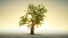 Un árbol que crece debajo del sol naciente ilustración del vector