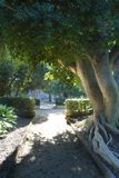 Un árbol que proporciona la sombra en una trayectoria imagen de archivo libre de regalías