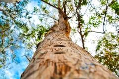 Un árbol que se coloca en bosque Imagenes de archivo