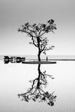 Un árbol reflexivo Imágenes de archivo libres de regalías