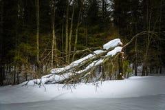 Un árbol roto grande fotografía de archivo