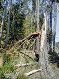 un árbol roto a través de un fuerte viento imagenes de archivo