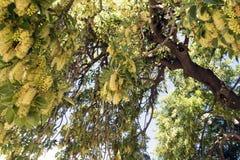 Un árbol salvaje Imagen de archivo libre de regalías