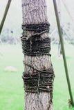 Un árbol se ata nos con las cuerdas foto de archivo libre de regalías