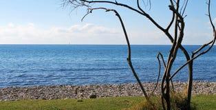 Un árbol seco en la costa imágenes de archivo libres de regalías