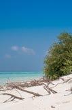 Árbol seco en la playa Imágenes de archivo libres de regalías