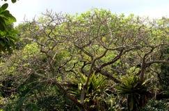 Un árbol sin las hojas foto de archivo
