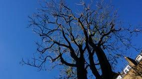 Un árbol sin las hojas fotografía de archivo libre de regalías
