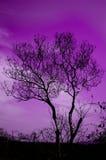 Un árbol solitario fotos de archivo