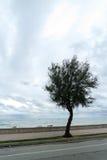 Un árbol solitario Foto de archivo libre de regalías