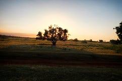 Un árbol solitario con la puesta del sol detrás de ella Foto de archivo