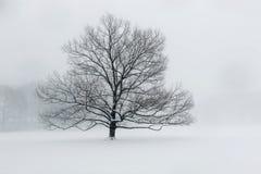 Un árbol solitario en nieve Imagen de archivo libre de regalías