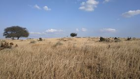 Un árbol solitario en prados foto de archivo libre de regalías
