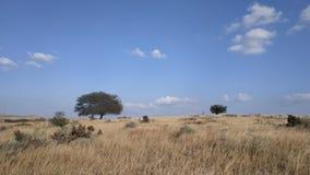 Un árbol solitario en prados fotos de archivo libres de regalías
