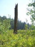 Un árbol solitario que sufrió adversidad fotografía de archivo