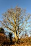 Un árbol solo Fotografía de archivo libre de regalías