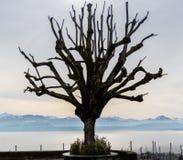Un árbol solo artístico el lago Lemán y montañas suizas imagenes de archivo