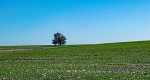 Un árbol solo del soporte en el horizonte - fondos Fotos de archivo libres de regalías