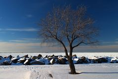 Un árbol solo, desnudo por el lago Erie congelado imagen de archivo libre de regalías