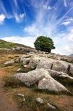 Un árbol solo en los Pirineos fotografía de archivo libre de regalías