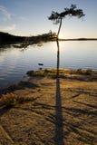 Un árbol solo en puesta del sol Fotos de archivo libres de regalías
